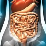 intestino, virus en el intestino